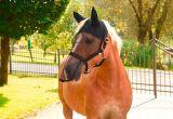 Vliegenhalster/masker paard/pony